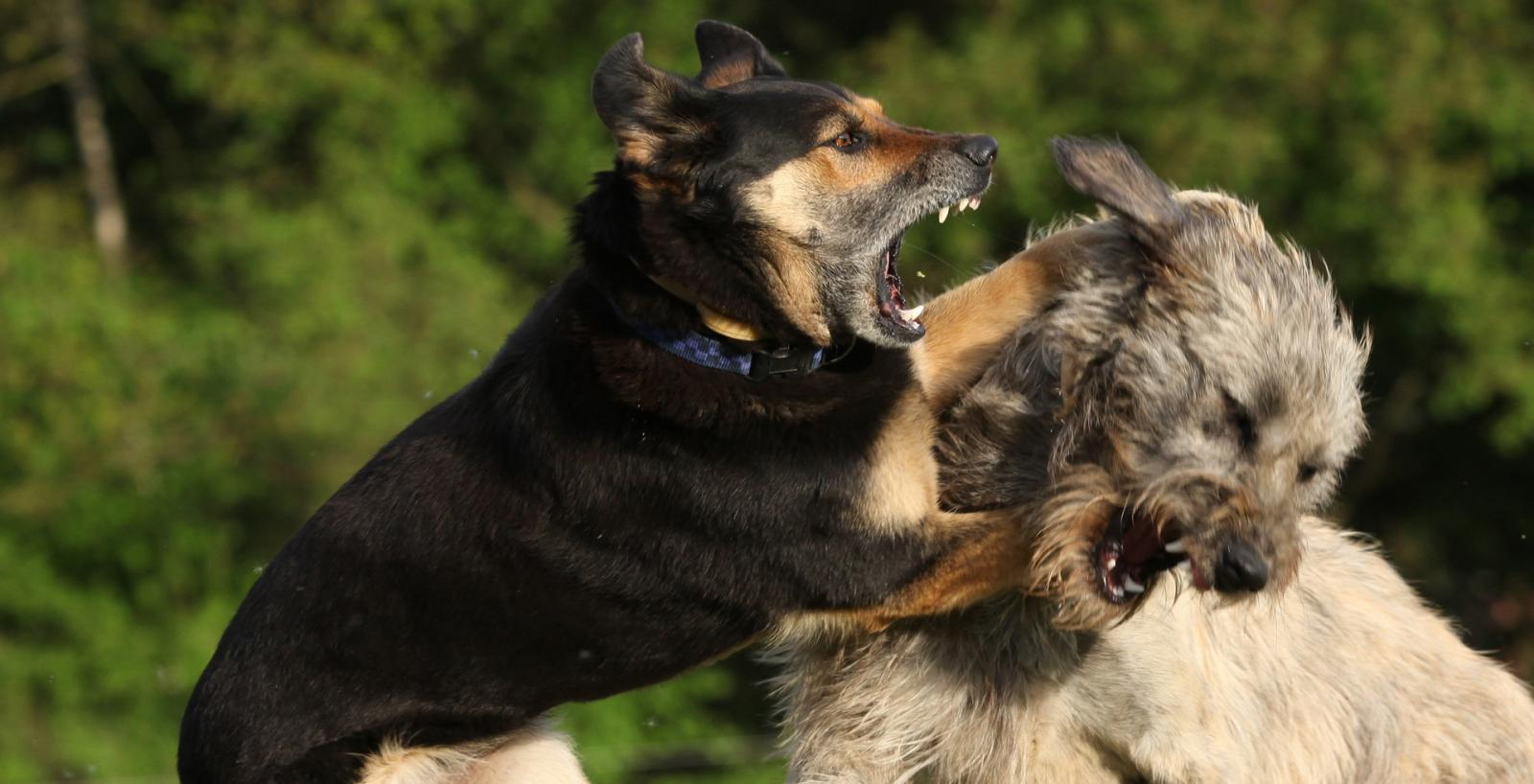 Are You Experiencing Aggressive Behavior With Your Dog If So We Can Help